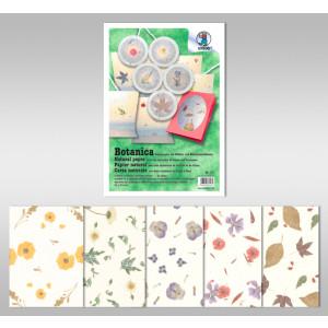 Botanica 35 g/qm 50 x 70 cm - 10 Bogen sortiert